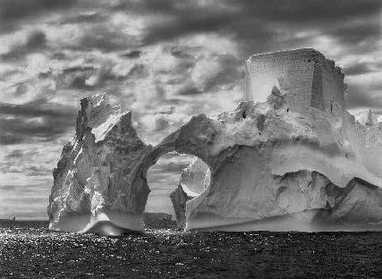 salgado antartica